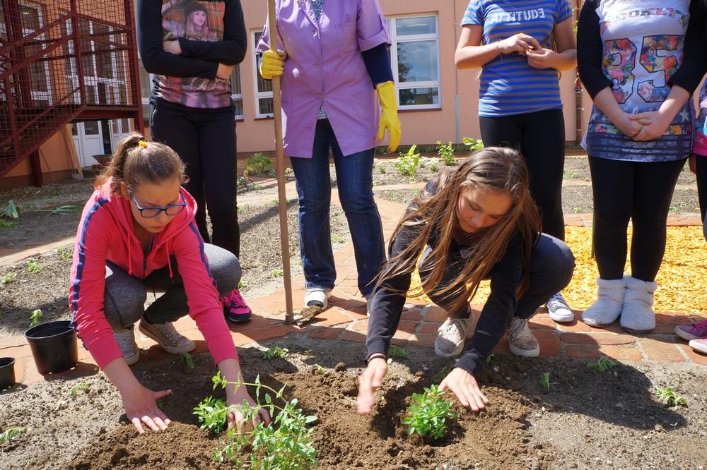 Učenici iz šešira izvukli svoju začinsku biljku