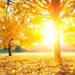 Jesen je dobra