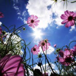 Cvjetna livada