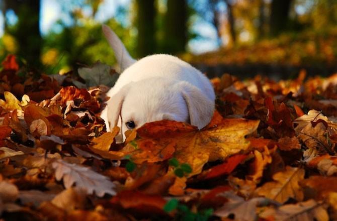 Slikovni rezultat za jesen