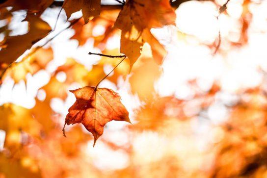 Akrostih o jeseni