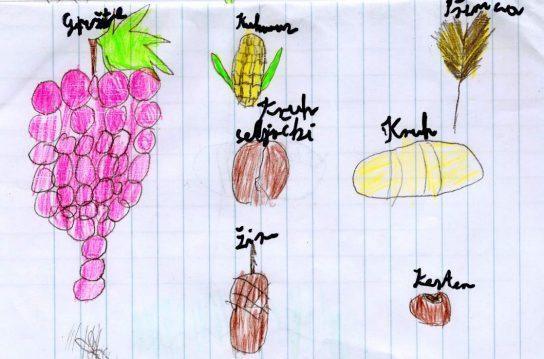 Plodovi zemlje